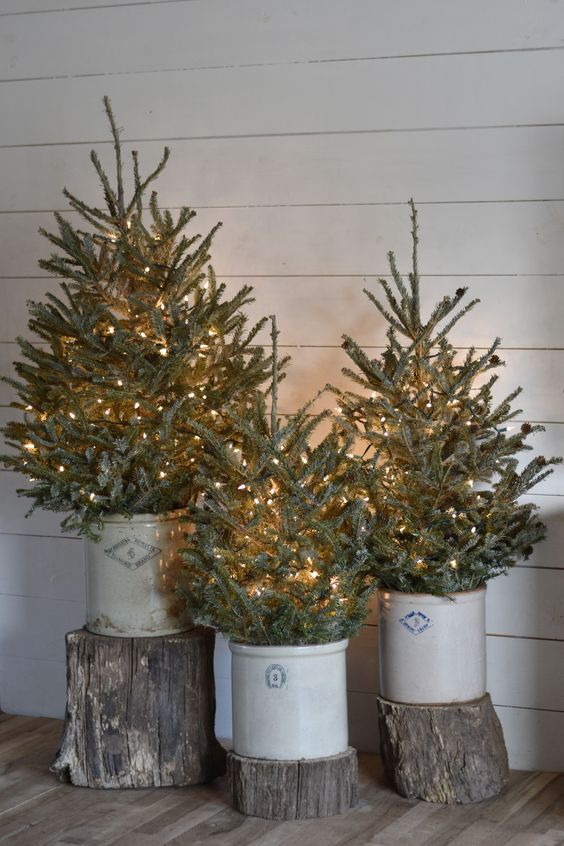 a cool rustic Christmas trio of three trees in buckets, with lights and on tree stumps