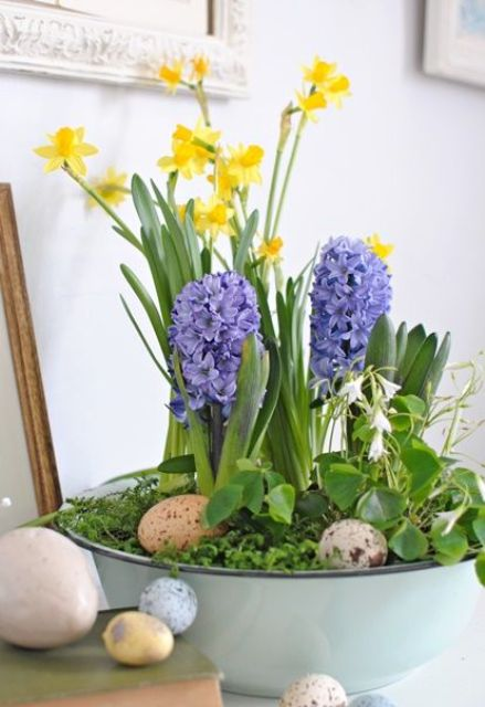 a blue bath with greenery, speckled eggs, yellow daffodils and purple hyacinths for Easter