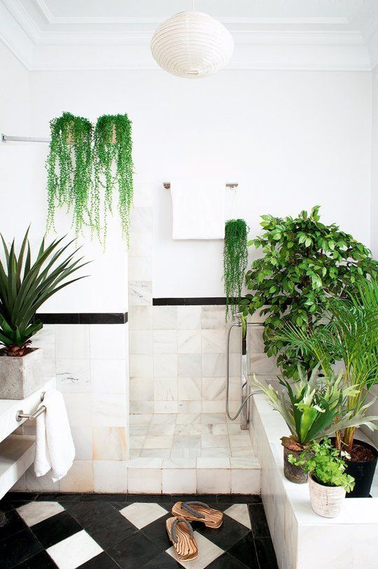 a contemporary monochromatic space with lots of potted greenery, succulents and statement plants for a fresh look