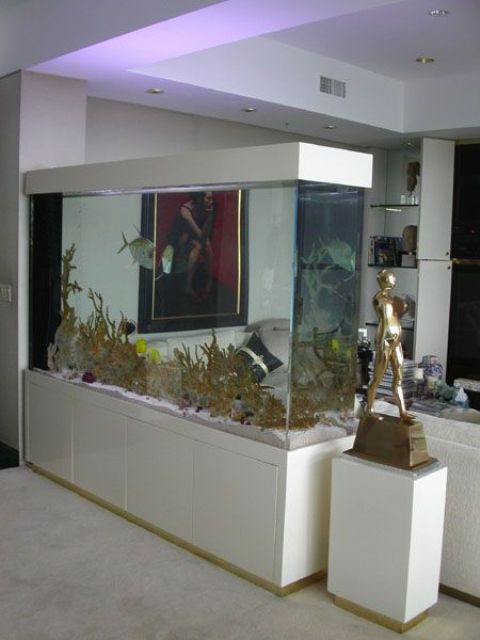 a large aquarium is a space divider and a decor feature looks bold and cool and will add to the decor of the space
