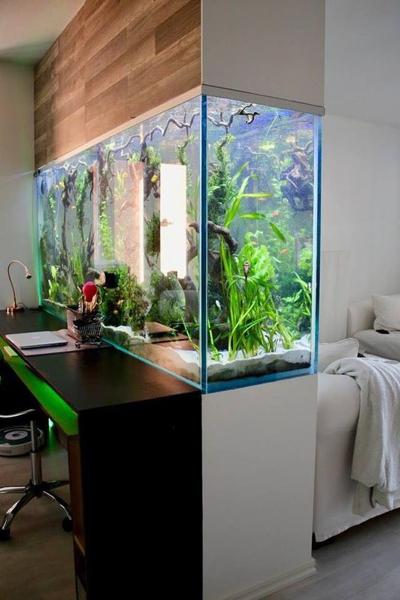a stunning statement aquarium as a space divider for a working and sleeping zone is a very cool and relaxing option to go for