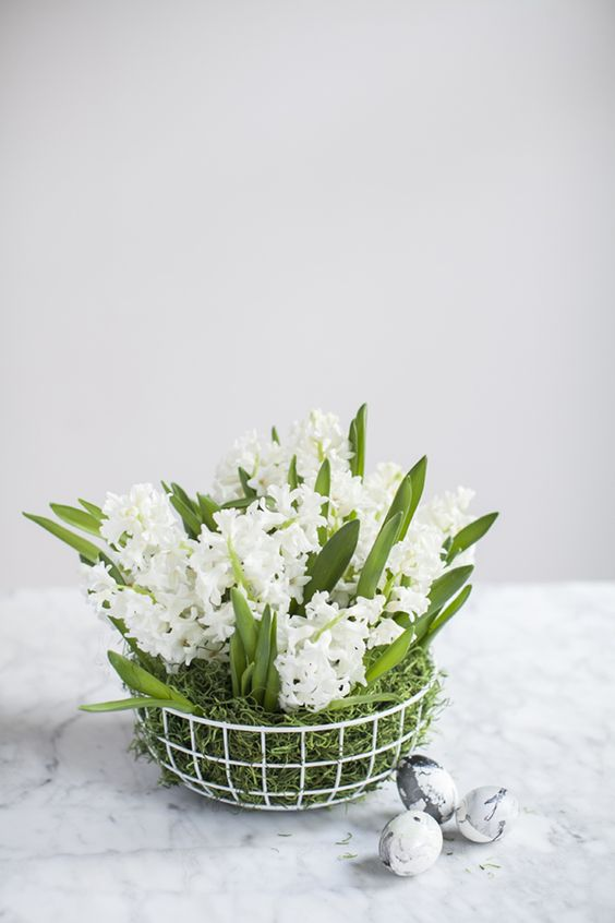 a wire basket with moss and white spring bulbs is a very fresh and cute Easter centerpiece