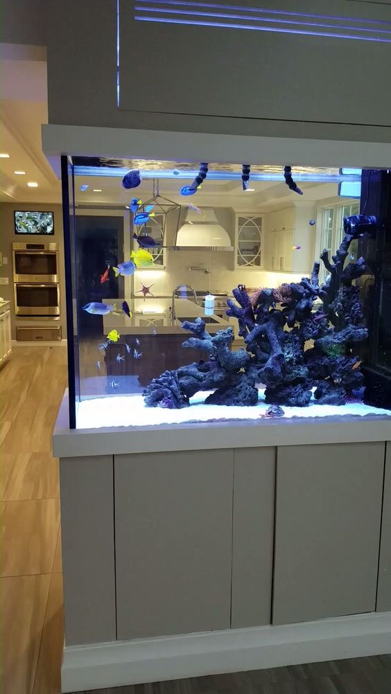 an aquarium dividing the kitchen and the living room is a cool idea that rocks