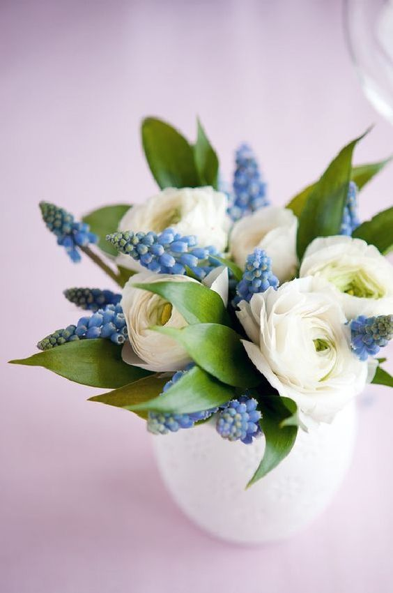 white ranunculus and blue grape hyacinth is a very spring like flower arrangement