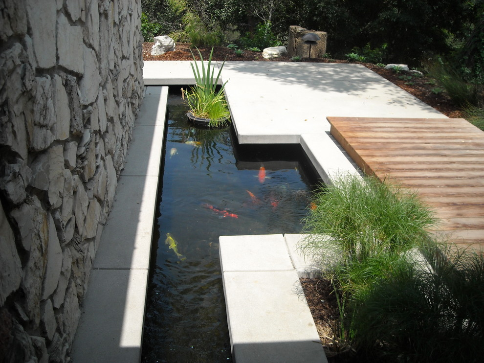 a contemporary pond is a perfect background for fancy goldfishes