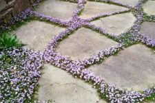a stone garden path with lilac blooms in between to higlight the stones and contrast them