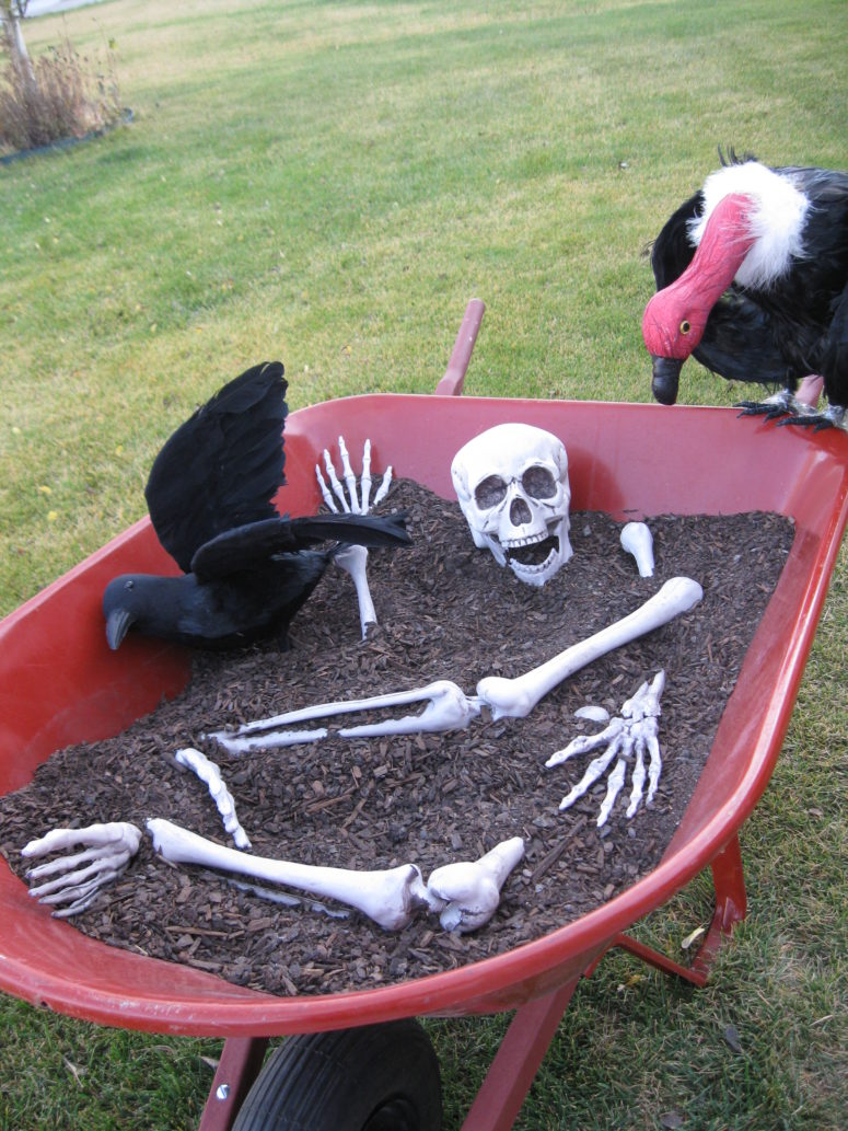 A skeleton and a black raven in a wheelbarrow is a decoration you can easily move around your backyard.