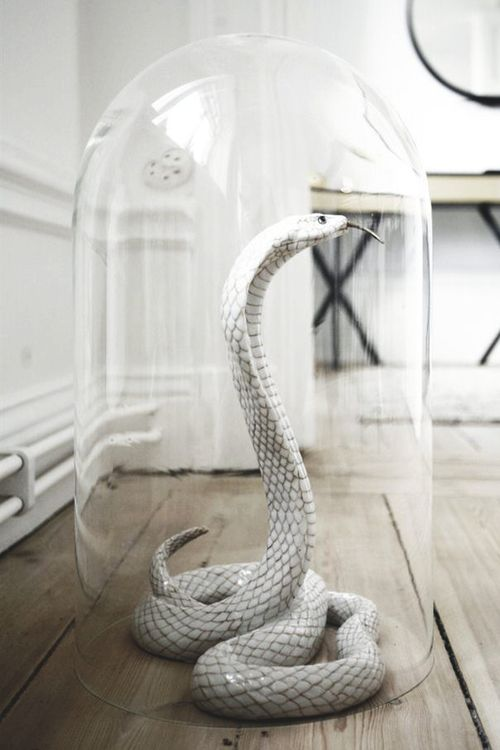 a glass cloche, rubber snake, wire and spray paint are all you need to recreate such a decoration