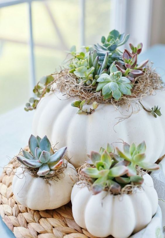 white pumpkins as planters with hay and succulents and a woven placemat for a chic and cozy fall look