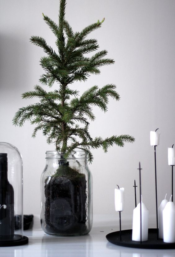 a minimalist Christmas tree in a jar and white candles on a black candelabra for a cool minimal look