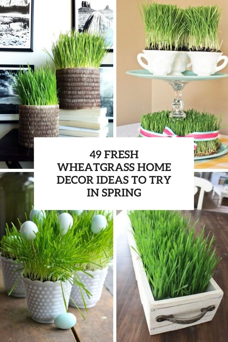 49 Fresh Wheatgrass Home Décor Ideas To Try In Spring