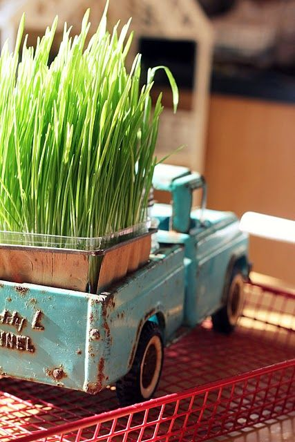 a blue vintage truck with a planter with wheatgrass is a lovely rustic decoration for spring