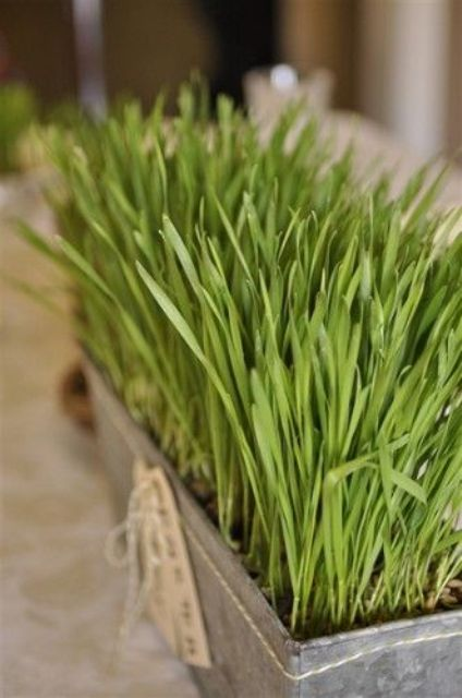 a tin planter with wheatgrass and twine and tags is a lovely and cool spring centerpiece with a rustic feel