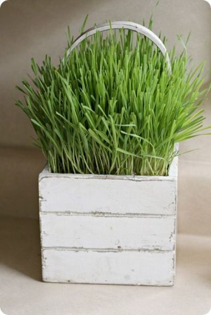 a white box planter with a handle and wheatgrass is a lovely and cute rustic decoration to rock