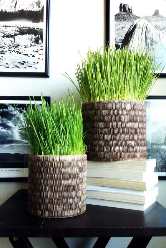 cool woven planters with wheatgrass will be a nice modern decoration idea for any space