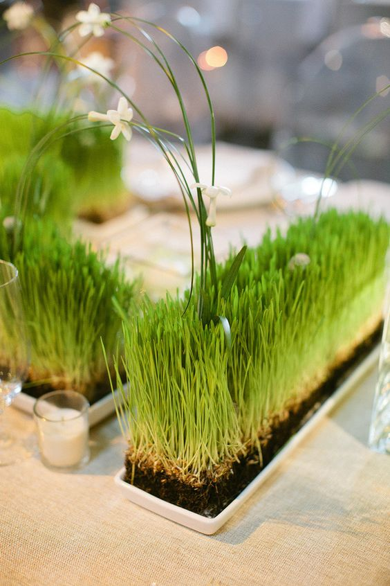 wheatgrass in trays with long grasses and white blooms are lovely spring decorations that are living and fresh