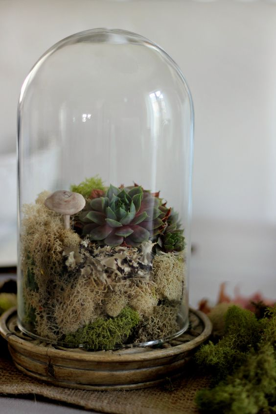a cloche terrarium with moss, succulents and a faux mushroom is a lovely idea for any season to feel woodlands