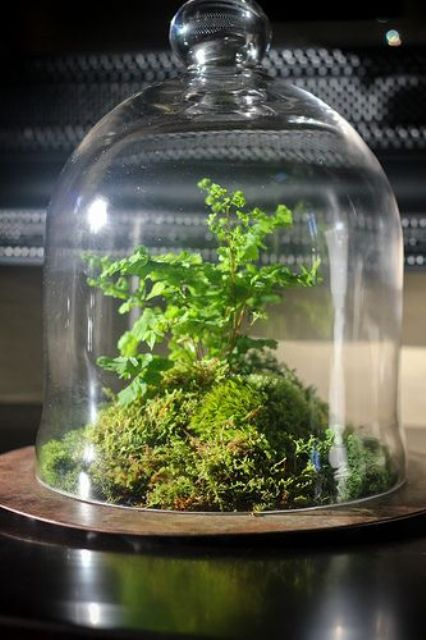 a cloche with moss and greenery inside is a stylish idea of a spring centerpiece that you can easily make