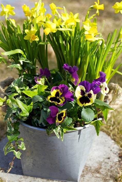 a galvanized bucket with daffodils and pansies will bring a spring feel to your outdoor space
