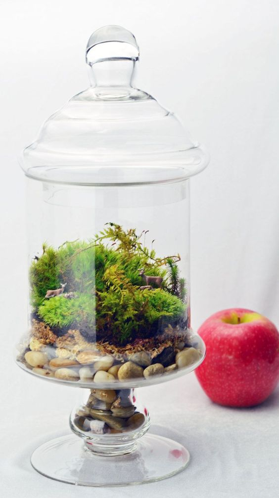 a glass jar with pebbles, moss and fern is a lovely idea of a terrrarium, for spring, summer or fall