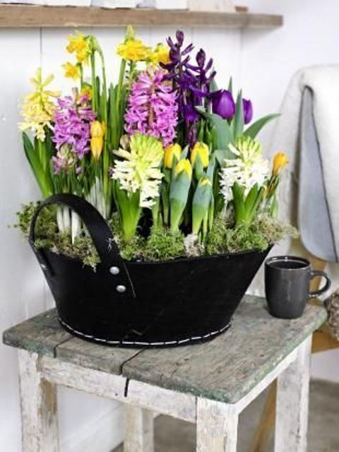 a gorgeous spring decoration of a black bucket, moss and lots of bright spring bulbs is great for both indoors and outdoors