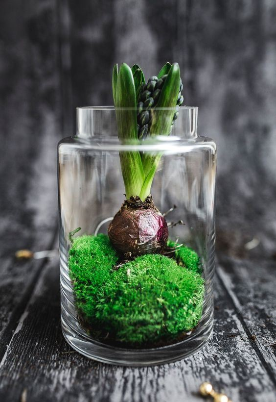 a jar with moss and a hyacinth is a cool idea to decorate your space for spring, both indoors and outdoors