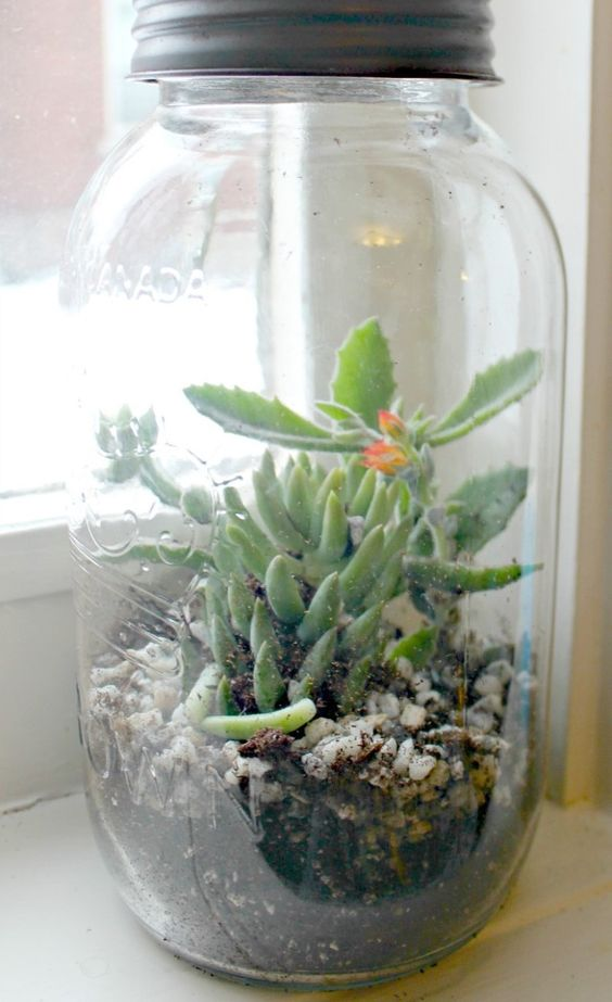 a jar with pebbles and small succulents is a cool and chic idea for a modern space and it feels very spring-like