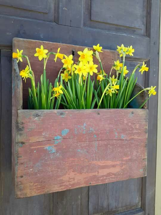 a shabby chic spring door decoration - a wooden planter and daffodils instead of a usual wreath for your door