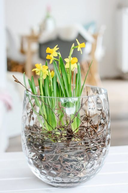 a sheer vase with vine and daffodils is a lovely and easy spring decoration for any space