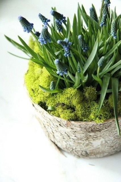 a tree stump with moss and blue hyacinths is a pretty rustic decoration for spring that you can rock