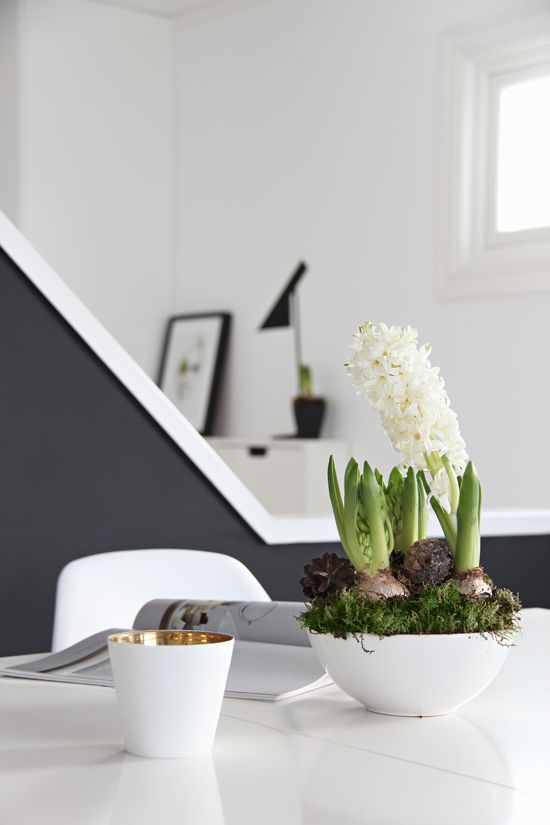 a white bowl with moss and white hyacinths is a lovely Scandinavian decoration for spring
