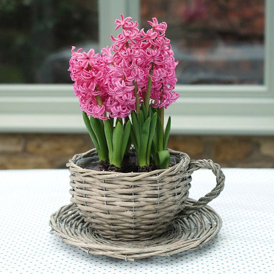 a woven teacup planter with pink hyacinths is an amazing rustic idea with a spring feel for your space