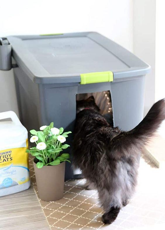 an oversized plastic container covering a cat litter box is a simple and fast solution for a small cat