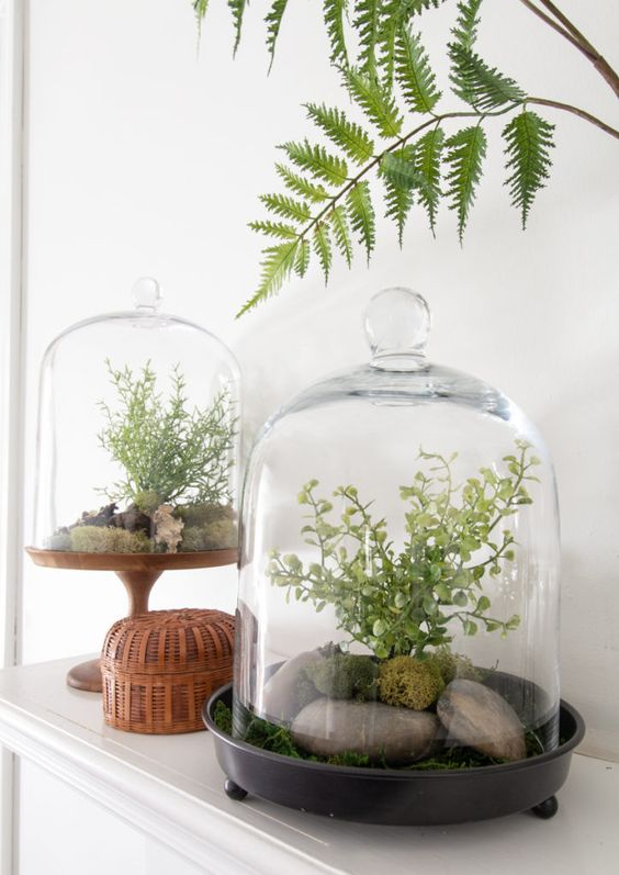 cloche terrariums with moss, grass, rocks and green plants add a fresh spring touch to the space