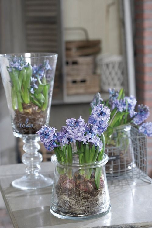 glasses and jars with purple and blue hyacinths for a delicate and chic vintage touch to your space and a spring feel at the same time