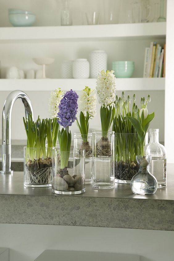 glasses with white and purple hyacinths is a lovely idea of a cluster centerpiece or just decoration