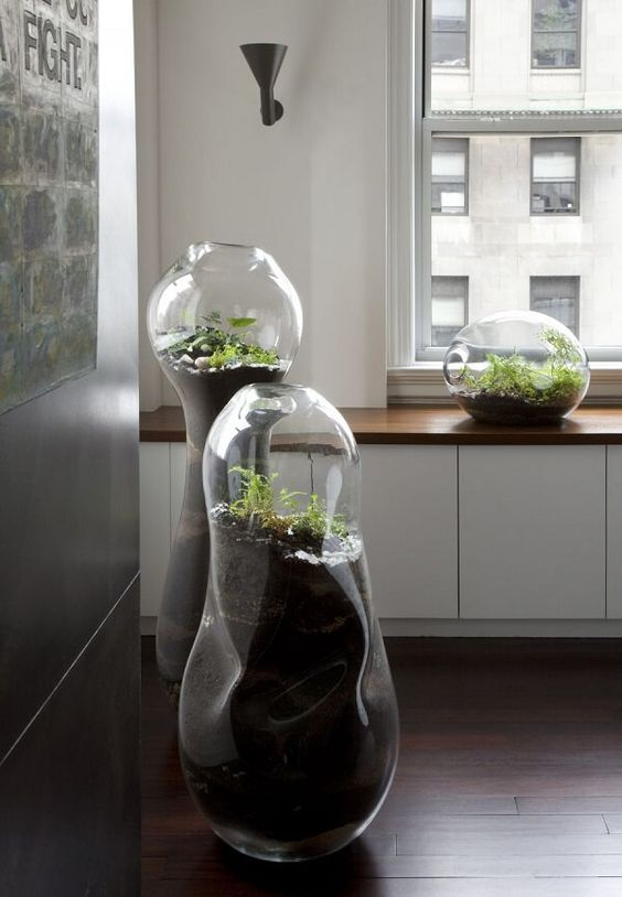 oversized modern terrariums with greenery and pebbles will make your space look really unusual and cool