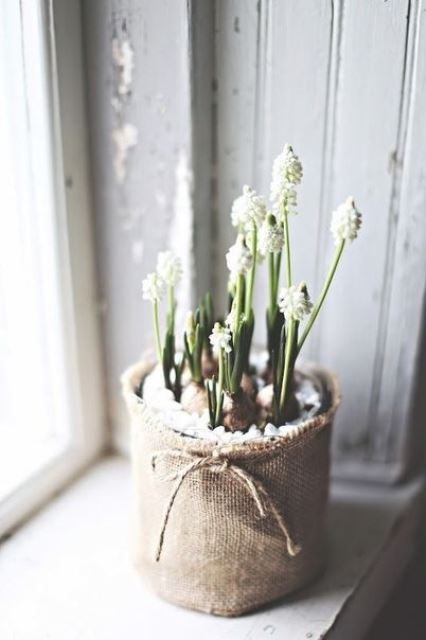 potted white hyacinths with pebbles and in a burlap sack for bringing a touch of spring to the space