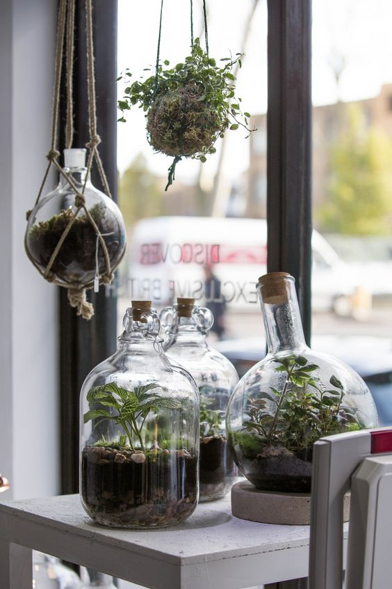 several bottle and jar terrariums with pebbles, greenery and succulents plus a kokedama for adding a spring feel to the space