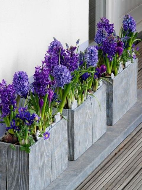 wooden planters with purple hyacinths and other blooms are lovely to spruce up the space for spring