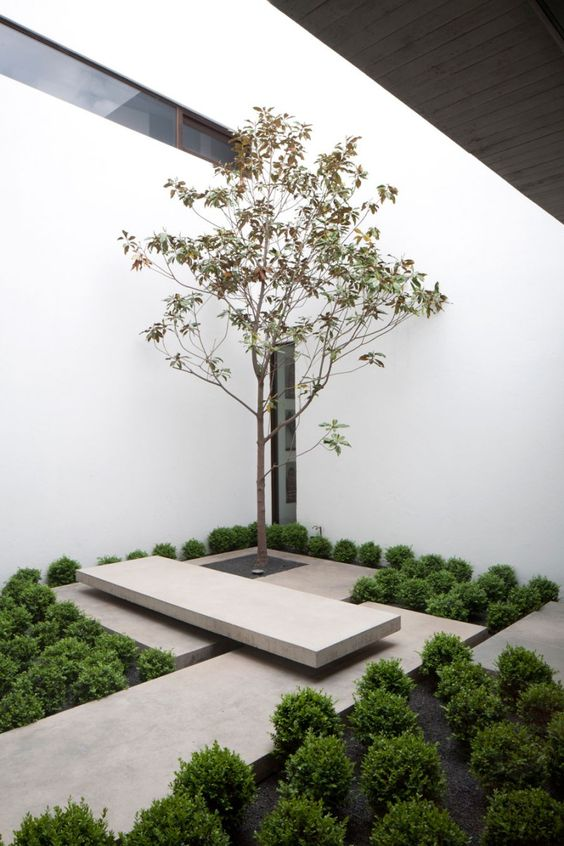 a minimalist indoor courtyard with greenery and concrete platforms plus a single tree that is accented