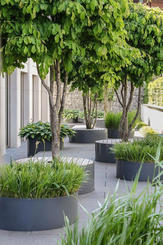 a minimalist townhouse garden with minimal flower beds with grasses and trees with wooden seats