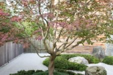 a simple Japanese courtyard with large rocks, grass and a single blooming tree in the center of the space