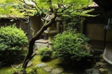 a small Japanese courtyard with moss, greenery, rocks and a single tree right in the center