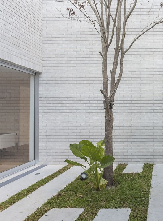 a small and simple courtyard wiht some greenery, concrete pavers and a single tree growing here