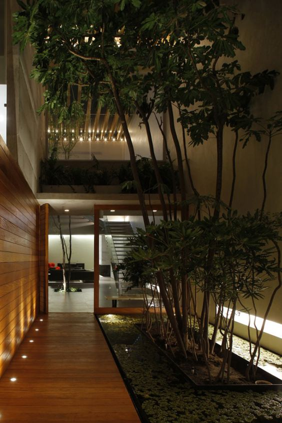 a small and stylish indoor courtyard with a water garden and trees growing righ in its center