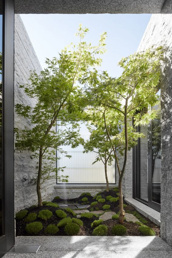 a small yet refreshing indoor courtyard with moss, rocks and several trees growing here