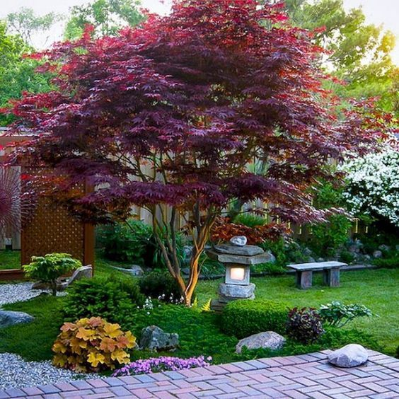 grass, shrubs, bold blooms and a red maple, a stone lantern plus a stone bench for a bold modern Japanese front yard