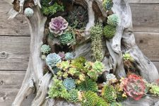 a driftwood piece with lots of succulents and greenery is beautiful and all-natural decor idea for outdoors