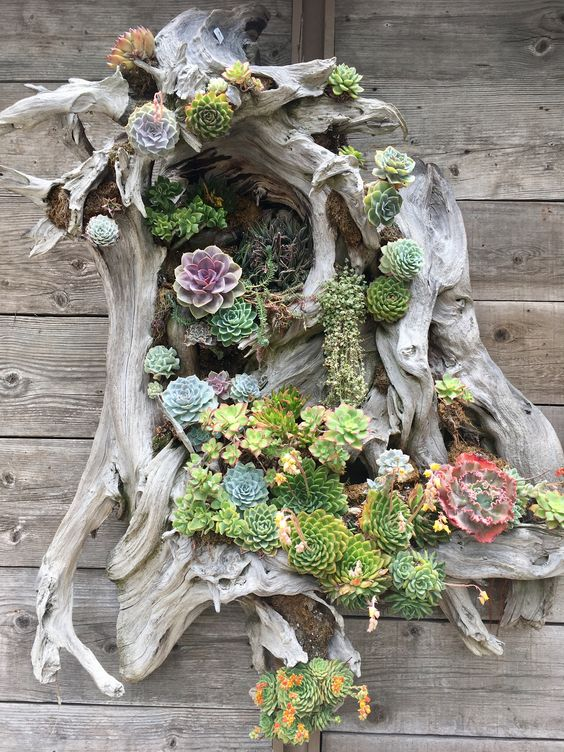 a driftwood piece with lots of succulents and greenery is beautiful and all natural decor idea for outdoors